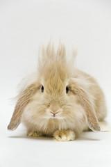 [フリー画像] 動物, 哺乳類, 兎・ウサギ, ジーンズ, 201105231100