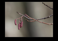 Spring is here again (AndersWx) Tags: canon spring värmland