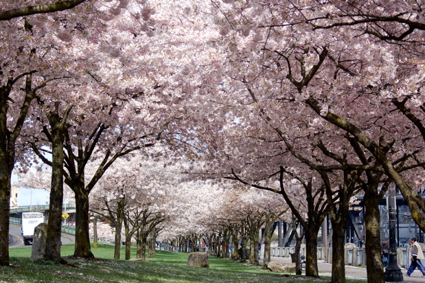 flowers_ctrees_alley_looking_northward