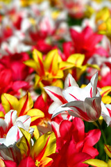 Have a great weekend my friends (kees straver (will be back online soon friends)) Tags: flowers colours keukenhof greatweekend keesstraver aflowerformyfriends tomanycolours