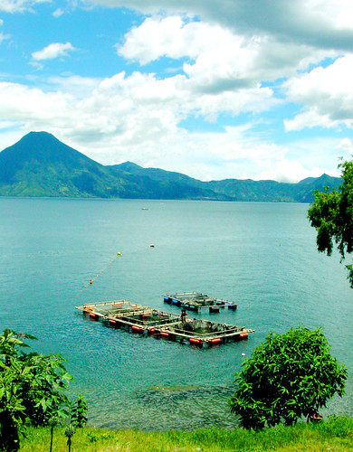 Lake Atitlan Fish Farm