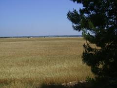 Campagna Lizzanese (lizzanonelcuore) Tags: nature natura salento puglia taranto grano tarente mediterranea apulia macchia vegetazione tarentum lizzano salentina cereali salentino