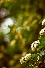 BOKEH MIRAGE (eugene.photography) Tags: 50mm interesting bokeh explore mirage f18 naturesfinest hbw d80 mirare meltit photowalk4 ehbd bgistoohot youcanseea mirageofbokeh