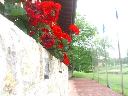 Hotel Aldama Flowers
