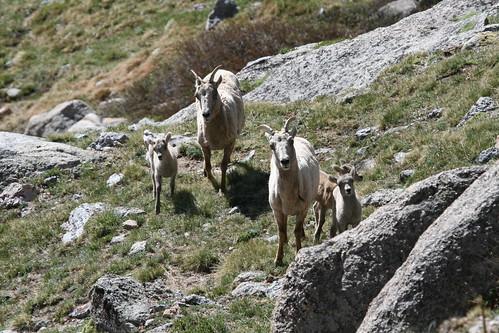 Mt. Evans Ascent 2008