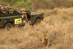 MMC230 (best_destinations) Tags: elephant game photo lion reserve safari mala rino