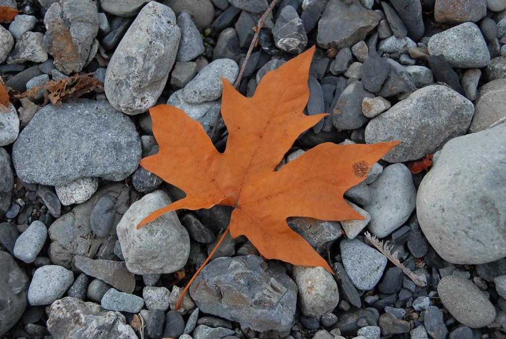 Leaf me be...