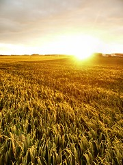 Sunset on wheats (fatseth) Tags: light sunset sky sun hot green sunrise soleil warm lumire wheat horizon coucher culture vert ciel burn crop chaud morel couch bl fatseth genseric