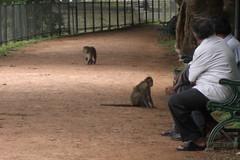 Lalbagh Botanical Gardens, Bangalore (7)