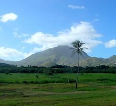Green (jmven) Tags: green field island kodak outdoor venezuela margarita guayamuri z612