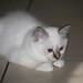 Remco's kitten 3