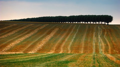 Striped field (Per Foreby) Tags: brown tree green field landscape panasonic explore gs stipe blueribbonwinner mywinners tz5 enbrabild