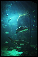 London Aquarium (Megara Liancourt) Tags: london water squall aquarium jaws cherryontop aplusphoto colourartaward platinumheartaward flickrslegend theperfectphotographer