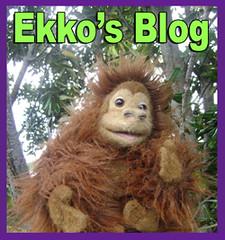 Ekkos Entre flat sml