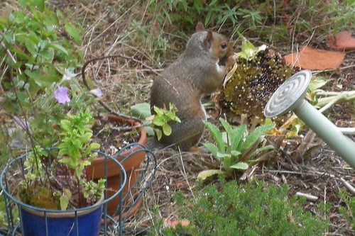Squirrel Things Sunflower Seeds Are Yummy