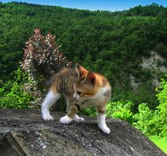 Beholder (Xena*best friend*) Tags: pet cats landscape chats feline kitty kittens gato gatto katzen feral monicabellucci monicab canondigitalixus50