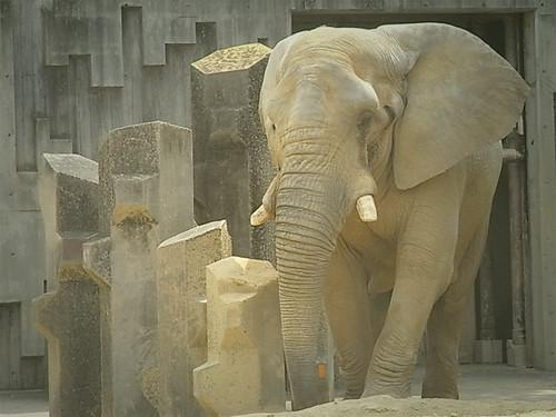 ゾウ|無料写真素材
