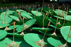 Parasols in the Sun