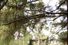 ... (Ola Kwiecien) Tags: nikon sweden kwiecie kwiecien boras
