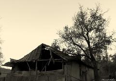 (Hamid Salari) Tags: tree home iran mashad torghabeh   hamidsalari