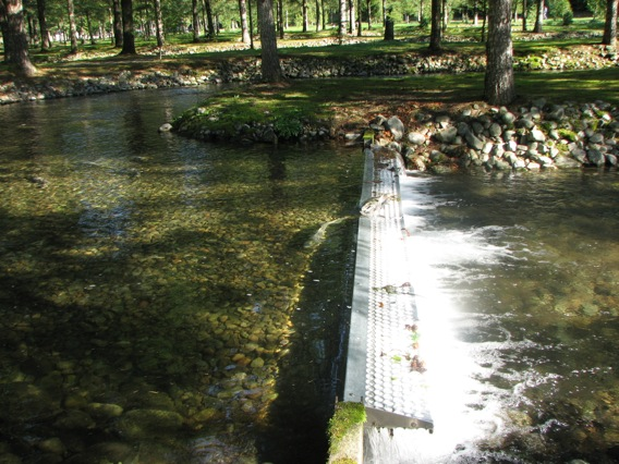 Weaver Creek Spawning Channel