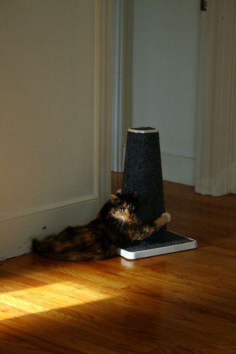 Cali the Calico Cat Works the Scratching Post - IMG_9762