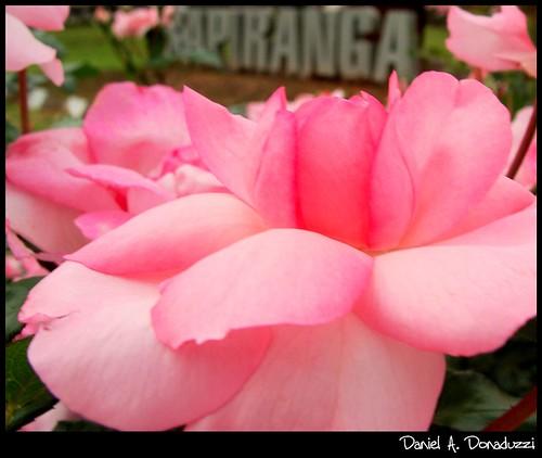 Sapiranga, cidade das Rosas