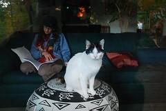 Through the window (skuarua) Tags: trees reflection cat felines darlene cakeo skiprussell