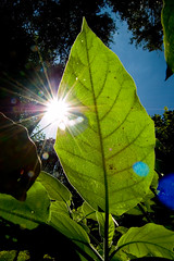 life (Ari Hahn) Tags: light sun leaf tilt aplusphoto