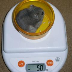 コー太は体重減少です。