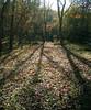 El otoño en su esplendor (chasquito el roncoso) Tags: naturaleza nature colors guadalajara colores otoño 2008 frio willy autumm hojassecas pueblosnegros diaotoñal llusà