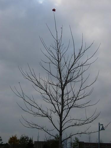 唯一的树叶