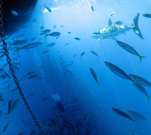 submersiblecage