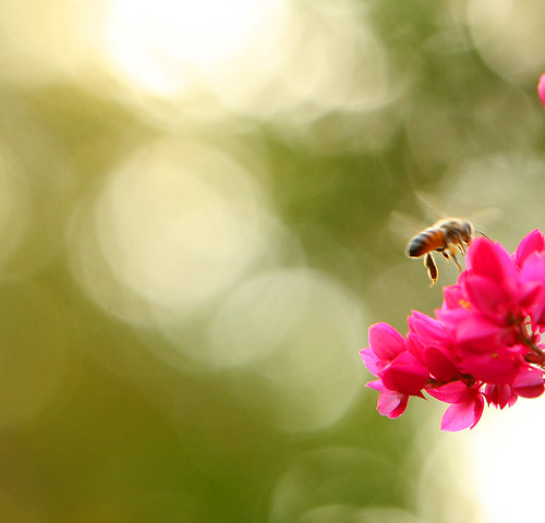 in the key of...bee! (imagoism thursday 26)