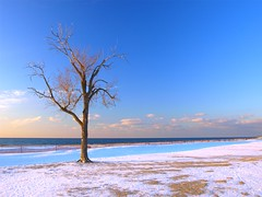 Cold 'n Lonely (PhotoDocGVSU) Tags: winter tree lakemichigan greatlakes lonely transition solitary hollandstatepark hollandmi lateautumn supershot abigfave impressedbeauty