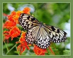 Butterfly and flower (Andy Coe) Tags: flower nature butterfly wings exotic colourful rotherham southyorkshire butterflyfarm northanston