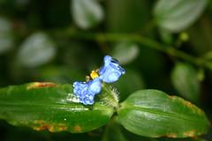 Flower - Rain Forest