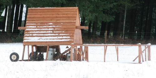 snow_free_range