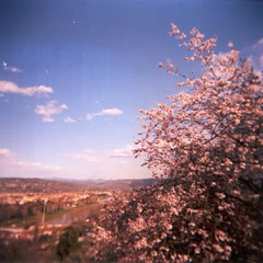 Spring is out of focus (Jano De Cesare) Tags: pink flowers color 120 analog florence holga spring lomo lomography kodak blossoms sightseeing grain outoffocus iso firenze michelangelo piazzale vc squared 160 gcfn