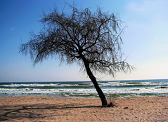 A lonely tree and the Black Sea (DenesG1-still off, computerproblems) Tags: tree colors sand waves romania blacksea karadeniz soe mamaia supershot mareaneagra topshots bej mywinners abigfave cernomore theunforgettablepictures canons5is feketetenger goldstaraward natureselegantshots dragondaggeraward denesg1 imagesofthelittleprince fleursetpaysages flickrsportal outstandingforeignphotographersvisitingromania cornemore saariysqualitypicture