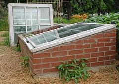 Cold Frame Nurseries