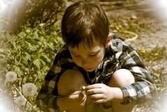 DSC_7714-3 (Jackalynht) Tags: sun grass spring sean wish wishing