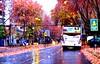 OTOÑO EN PROVI (Pablo C.M || BANCOIMAGENES.CL) Tags: chile city autumn santiago lluvia ciudad otoño providencia