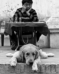 Luang Prabang - Laos (ale neri) Tags: street travel boy people bw dog work asian blackwhite asia southeastasia different child lazy same southeast laos lao luangprabang reportage aleneri alessandroneri