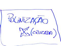 """texto escrito numa toalha de mesa: """"polinização cruzada"""""""