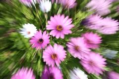 spring - bursting into life (journeyman62) Tags: pink flowers plants motion blur color colour nature canon petals spring movement focus zoom explosion creative burst riceworld rebelxti flowerpicturesnolimits incrediblenature fleursetpaysages