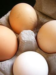 Fresh (harpazo_hope) Tags: egg feather fresh eggcarton freerange