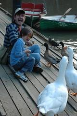 Hahaha, it tickles (Really Turning Japanese) Tags: family del aj fun geese funny ducks sean laugh feedingthebirds yarra milla studlyboathouse