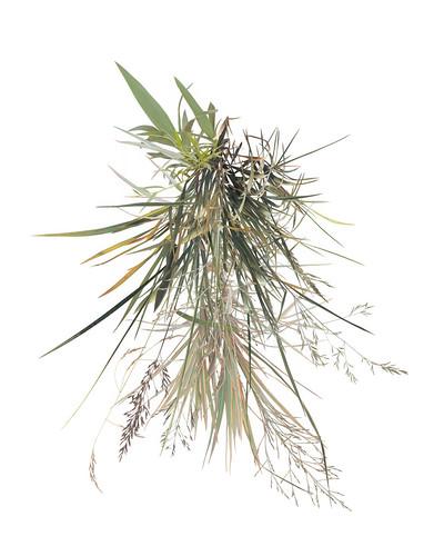 grass foliage (drapeIV)
