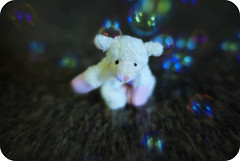 Hubble bubble toil and trouble (Singing With Light) Tags: toy sheep bubbles magnetic bahbahra